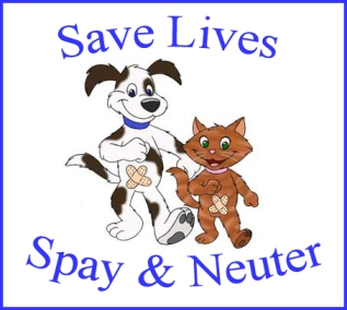 spay neuter sterilise pets ark animal rescue centre shelter